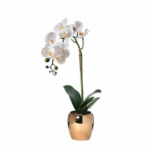 Bela Orhideja