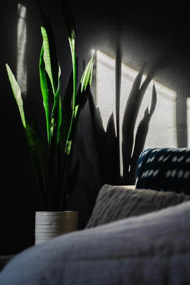 sobno bilje u tamnijim prostorijama