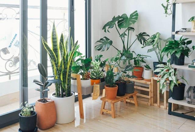 Kako odabrati najbolju biljku ili buket za dekorisanje vašeg doma