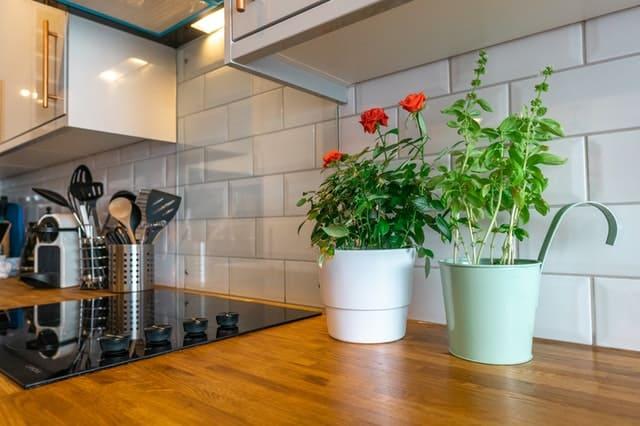 biljke za kuhinju