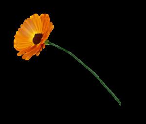 gerber cvet